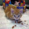 Bon succès de la 1ère journée Portes ouvertes à la SPCA