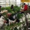 Le thème de la Ferme urbaine pour l'Expo Moissons en fleurs