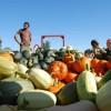 Les produits bio de la Coop Les Jardins de la résistance