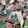 Apportez vos surplus de feuilles mortes à l'Écocentre