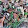 Un site de dépôt gratuit pour les surplus de feuilles mortes