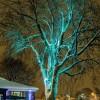 Arubulux : l'arbre qui illumine le parc Delpha-Sauvé