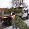 Des collectes d'arbre de Noël sur le territoire