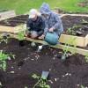Des jardins communautaires à saveur artistique