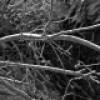 Des collectes de branches mortes à Châteauguay