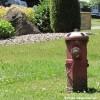 Dégagement des bornes d'incendie et panneaux de signalisation