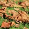 Environnement – Redonnez les feuilles mortes à la nature