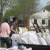 Ambioterra distribuera gratuitement des arbres