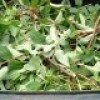 Collaboration demandée pour les collectes de résidus verts