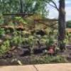 Nouveau projet écologique : les jardins de l'île Saint-Bernard