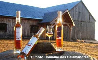 Domaine-des-Salamandres-a-Covey-Hill-Vin-de-glace-Photo-Domaine-des-Salamandres-publiee-par-INFOSuroit-com_