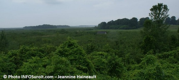 Reserve-nationale-de-faune-du-lac-Saint-Francois-Photo-INFOSuroit-com_Jeannine-Haineault