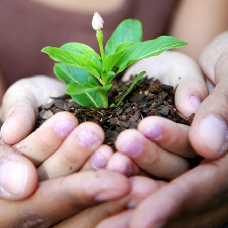 Inauguration d un nouveau parc et plantation d arbres for Plantation de fleurs