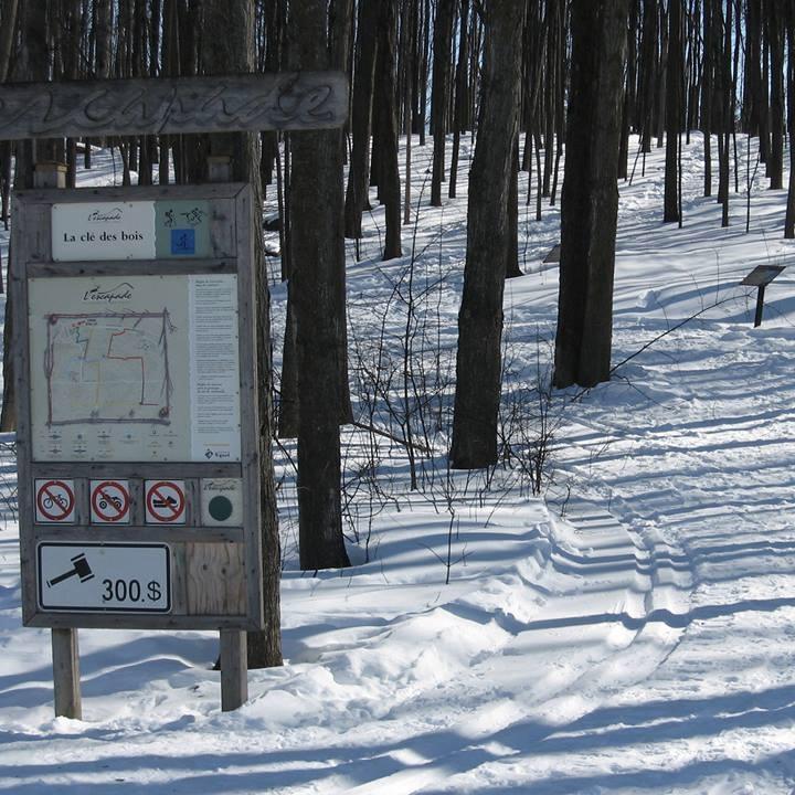 Sentiers de L Escapade du mont Rigaud le sentier Cle des bois hiver Photo courtoisie