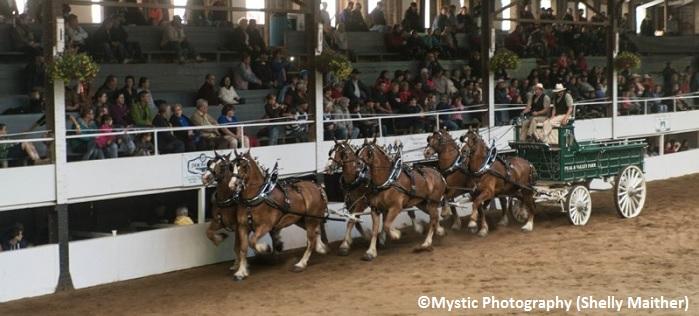 Expo Ormstown spectacle chevaux et attelages spectacteurs Copyright Photo Mystic-Photography par Shelly_Maither