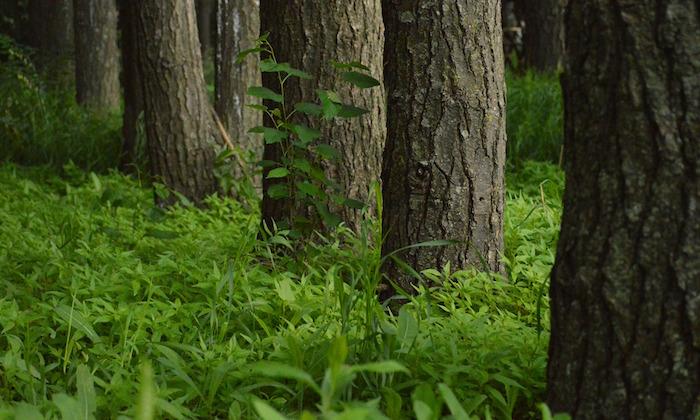 bois foret agroforesterie Photo Pixabay via INFOSuroit