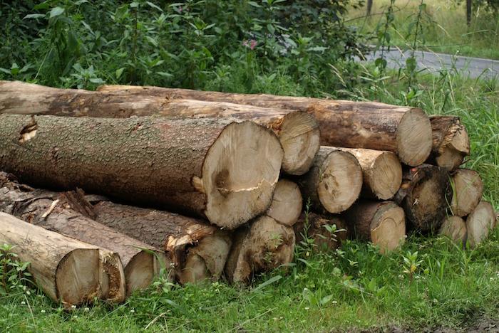 bois tronc d_arbres champ route Photo Pixabay via INFOSuroit