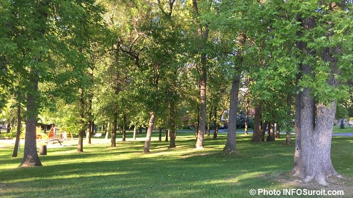 arbres-frenes-parc-paquette-valleyfield-septembre-2016-photo-infosuroit