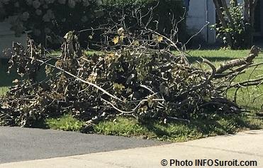 automne-branches-mortes-ramassage-devant-porte-photo-infosuroit_com
