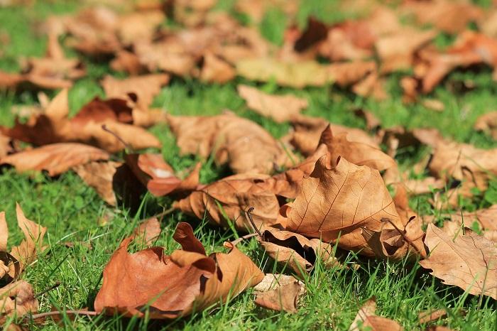 automne-feuilles-mortes-gazon-photo-pixabay-via-infosuroit_com