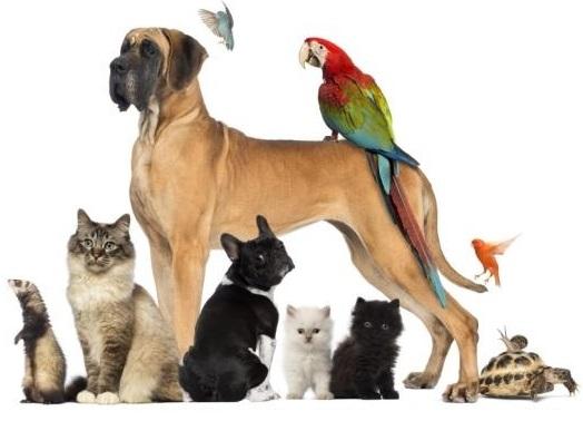 animauxdecompagnie-chiens-chats-oiseaux-et-plus-photo-courtoisie-ville-beauharnois