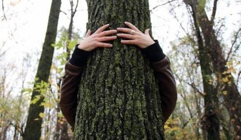 foresterie-urbaine-arbres-enlacement-photo-courtoisie-sdv-via-infosuroit