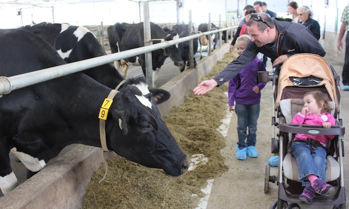 portes-ouvertes-sur-les-fermes-vaches-et-visiteurs-photo-courtoisie-upa