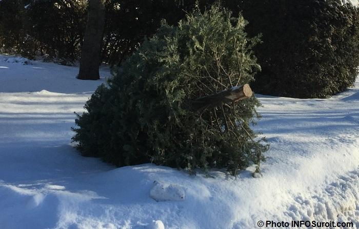 sapin-naturel-arbre-noel-temps-des-fetes-recuperation-photo-infosuroit_com
