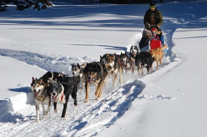 chiens de traineau hiver famille Photo OneFoxyLady via Pixabay