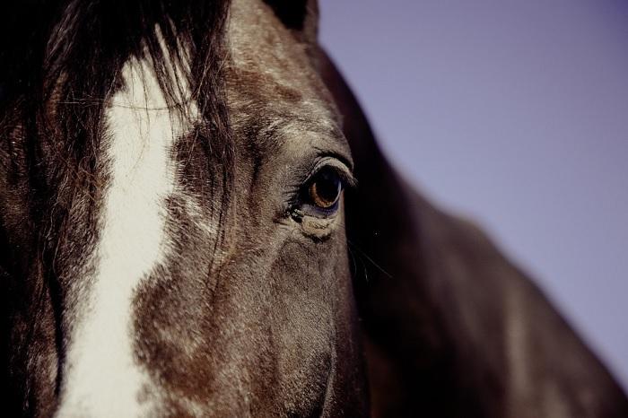 cheval equestre equitation Photo MarkUsspiske via Pixabay