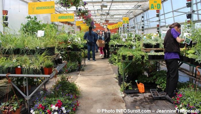 fleurs hemerocalles plantes arbustes CFPdesMoissons Photo INFOSuroit-Jeannine_Haineault