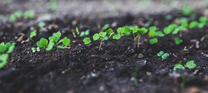 Horticulture – Conférence gratuite sur les semis à Beauharnois