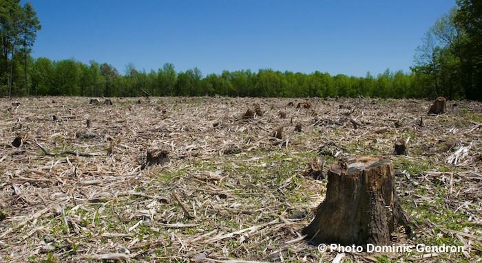 coupe bois arbres Corridor_vert_Chateauguay-Lery Copyright DominicGendron photo courtoisie HSB