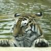 Des boissons glacées pour les animaux du Parc Safari
