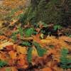 Cueillette de feuilles mortes à Châteauguay