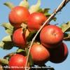 À découvrir; la Route de la pomme des cantons du Sud-Ouest