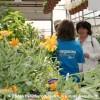 Moissons en fleurs 2012 dès le 27 avril à Beauharnois