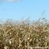 Agri Week 2012 – Les défis de nos entreprises agricoles