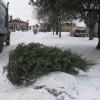Hausse de 10,2% des collectes de sapins de Noël