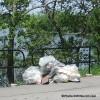 18 mai – Grand nettoyage de la rivière Châteauguay