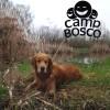 Au Camp Bosco avec Toutou pour la Journée mondiale des animaux