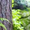 Agrile du frêne : Beauharnois fait l'inventaire de ses arbres