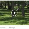 L'agrile du frêne : Vaudreuil-Dorion sensibilise en vidéo