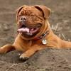 Châteauguay : pensez à renouveler la licence de votre chien