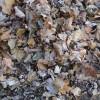 16 novembre : Dernière collecte de feuilles mortes à Saint-Stanislas