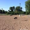 Fermeture préventive du parc à chiens à Valleyfield