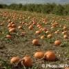 Importante consultation publique pour les producteurs agricoles