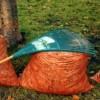 Résidus verts : 4 collectes porte-à-porte cet automne