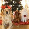 Règlement sur les animaux en préparation à Beauharnois