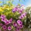 La Municipalité de Ste-Martine lance le concours Jardins fleuris
